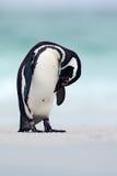 Пингвин на пляже с белым песком Пингвин в природе Пингвин Magellanic с волной моря Черно-белый пингвин в живой природе scen Стоковые Фото