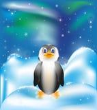 Пингвин на снеге и предпосылке северного сияния Стоковые Изображения RF