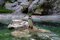 Пингвин около воды Стоковые Изображения