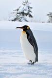 Пингвин Стоковые Фотографии RF