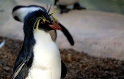 Пингвин Стоковое Изображение