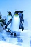 пингвин стоковое изображение rf