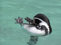 пингвин Стоковые Фото