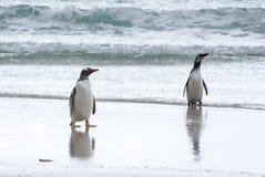 Пингвин Gentoo и пингвин Magellanic на пляже Стоковая Фотография RF
