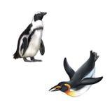 Пингвин Gentoo Иллюстрация изолированная на белизне Стоковые Изображения