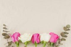 Пинк, белые розы и сухой евкалипт младенца выходят Стоковые Изображения RF