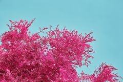 Пинк выходит снова голубое небо Стоковая Фотография RF