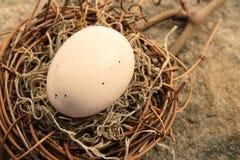 пинк гнездя пасхального яйца Стоковое Фото