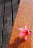 пинк жизни цветка все еще ставит древесину на обсуждение Стоковая Фотография RF