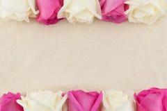 Пинк и белые розы на белой ткани муслина Стоковое фото RF