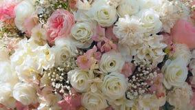 Пинк и белая роза Стоковые Изображения RF
