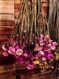 Пинк и желтые высушенные цветки вися вверх ногами на деревянной стене стоковая фотография