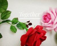 Пинк и красная роза с словом совместно Стоковая Фотография