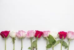 Пинк и красные розы на белой деревянной предпосылке Стоковые Изображения