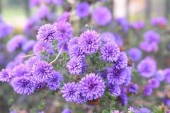 Пинк и пурпурные цветки разветвляют предпосылка стоковое фото