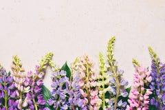 Пинк и пурпурные lupine цветки на мраморной предпосылке День рождения, День матери, карта дня Валентайн, 8-ое марта, свадьбы или  стоковые изображения rf