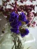 Пинк и пурпурный высушенный цветок стоковое фото