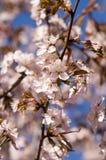 Пинк и синь цветы весны стоковое фото rf