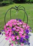 Пинк и фиолетовая петунья волны в железной вешалке Стоковые Фотографии RF
