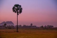 Пинк Мьянмы ладони захода солнца Стоковые Фото