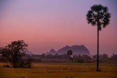 Пинк Мьянмы ладони захода солнца Стоковая Фотография