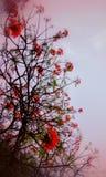 Пинк окружая на розовых цветках и зеленом стержне Стоковая Фотография