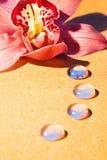 пинк орхидеи падений росы Стоковые Изображения RF