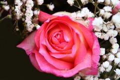 Пинк поднял цветки на предпосылке стоковые изображения rf