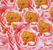 пинк предпосылки флористический Стоковые Фото