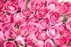 Пинк предпосылки букета роз, Стоковое Изображение RF