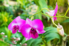 пинк сада цветка Стоковое фото RF