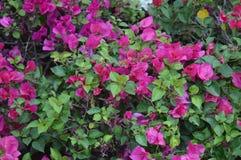 пинк сада цветков стоковое изображение rf