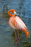 пинк фламингоа Стоковое фото RF