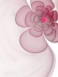 пинк фрактали цветка Стоковые Изображения RF