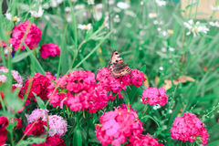 Пинк цветет зеленая предпосылка Стоковая Фотография RF