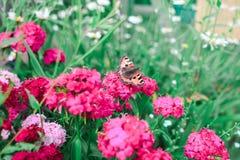 Пинк цветет зеленая предпосылка Стоковая Фотография