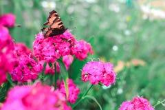 Пинк цветет зеленая предпосылка Стоковые Фотографии RF