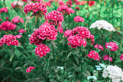 Пинк цветет зеленая предпосылка Стоковые Изображения RF