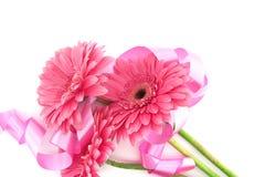 Пинк цветет Gerbera при лента изолированная на белой предпосылке Стоковое фото RF