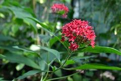 пинк цветка одного Стоковое Изображение RF