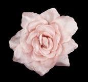 пинк цветка ткани Стоковое Изображение RF