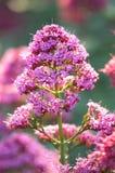 пинк цветка стоковое изображение