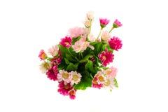 Пинк цветка стоковое изображение rf