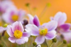 пинк цветков кровати цветастый Стоковое Изображение RF