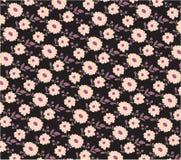 пинк цветков предпосылки черный Стоковая Фотография