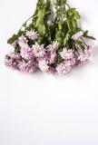 пинк цветков предпосылки флористический Стоковое фото RF
