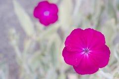 пинк цветков Стоковое Фото