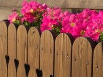 пинк цветков Стоковая Фотография