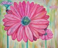 пинк цветков Стоковые Фотографии RF