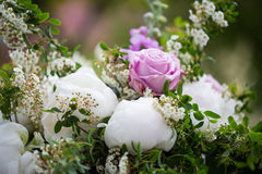 Пионы букета пиона, розовых и белых Стоковая Фотография